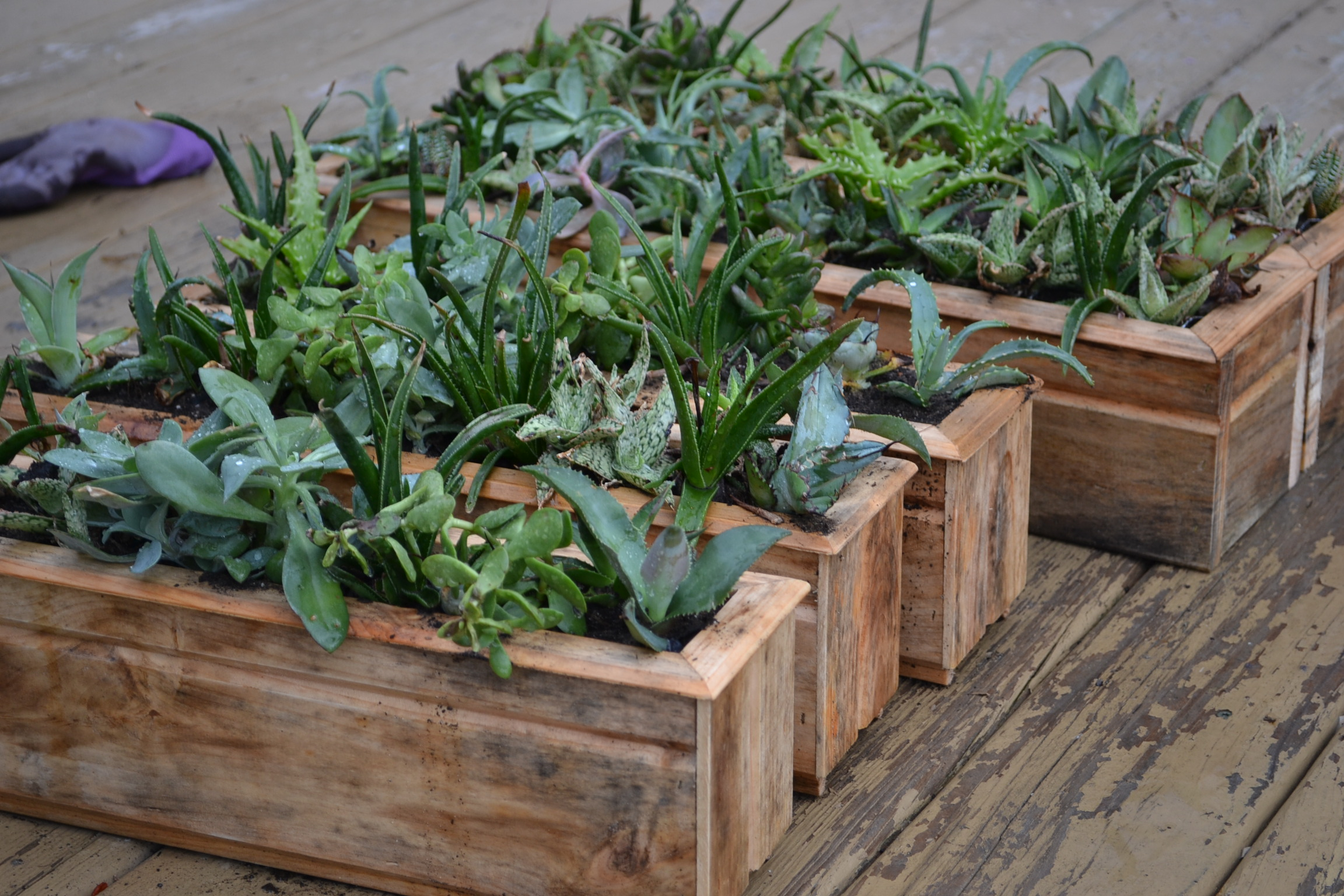 succulent planters solarpoweredkate