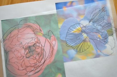 peony iris sketch